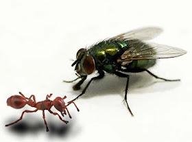 lalat dan nyamuk.jpg
